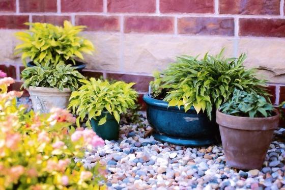 plants-in-pots
